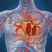 Kardiovaskulární riziko